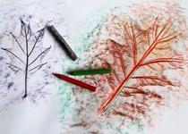 Frotáž z listí