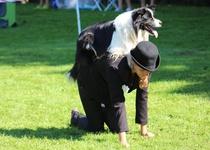 Adamovský dogdance podruhé