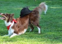Závody v tanci se psem