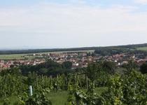 Slováckými vinohrady okolo Mutěnic aneb burčákový pochod