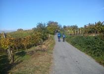 Slováckými vinohrady okolo Mutěnic aneb burčákový pochod ve fotografiích