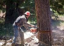 Kácení nadlimitních dřevin