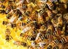 Přednáška o včelách a medu
