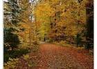 Procházka podzimním lesem