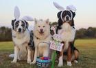 Velikonoční závod
