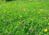 Sečení travnatých ploch v zastavěném území města