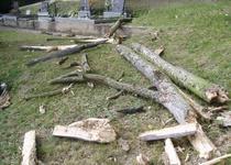 Těžba stromů u nového hřbitova v Adamově