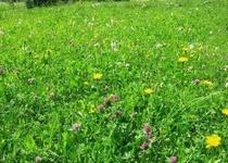 První sečení travnatých ploch v zastavěném území města