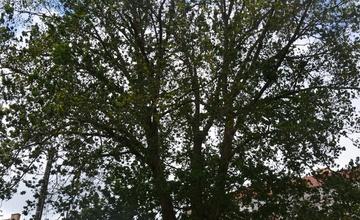 Bezpečnostní vazby stromů