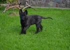 Výcvikové kurzy pro štěňata a psy do jednoho roku