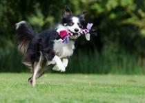 Výcvikový kurz pro štěňata a psy do jednoho roku