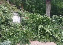 Aktuálně: okolí Ptačí svatyně po pádu stromu